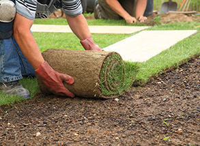 All About Sod Grass